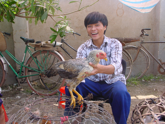 Chicken in Vietnam © GREASE